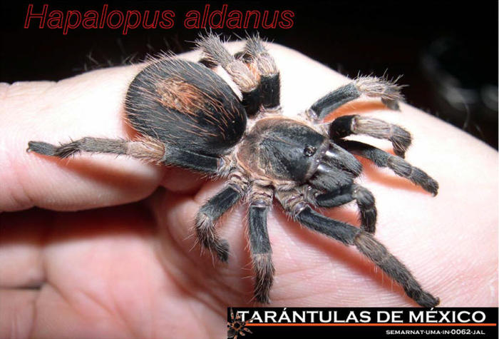 alan alda spider