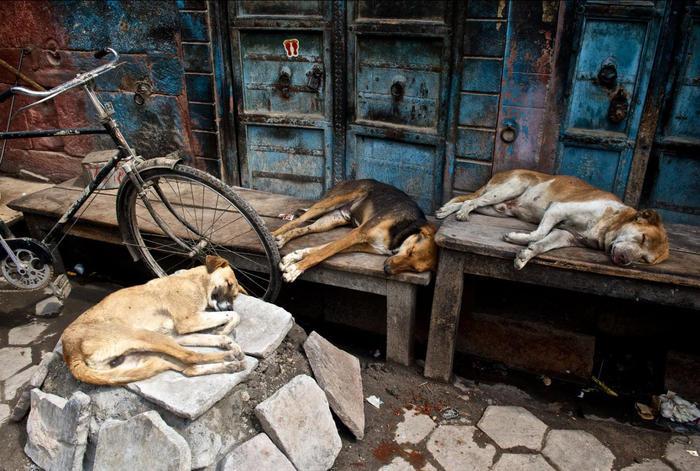 Homeless dogs by Hana Peskova
