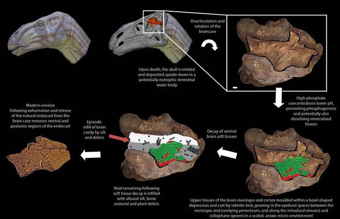 how brain preservation works