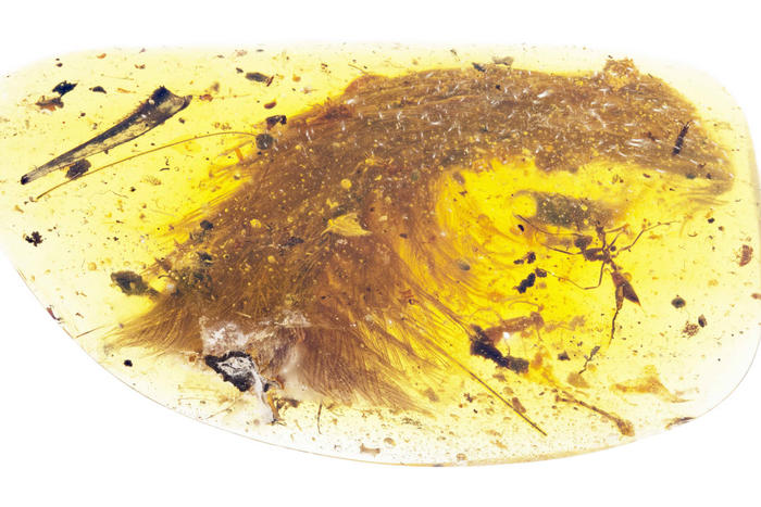 Tip of preserved tail section.