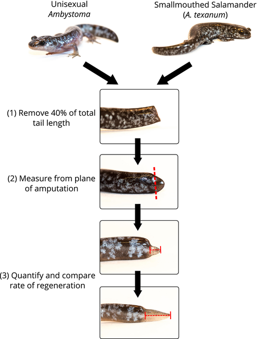 methodology for comparing tails