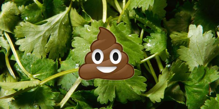 coriander taste science disgust love