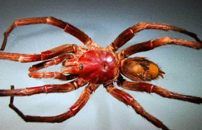 lennon spider