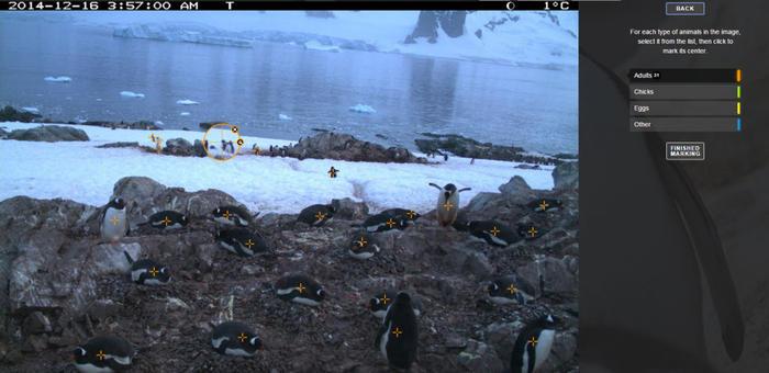 screenshot of penguin watch