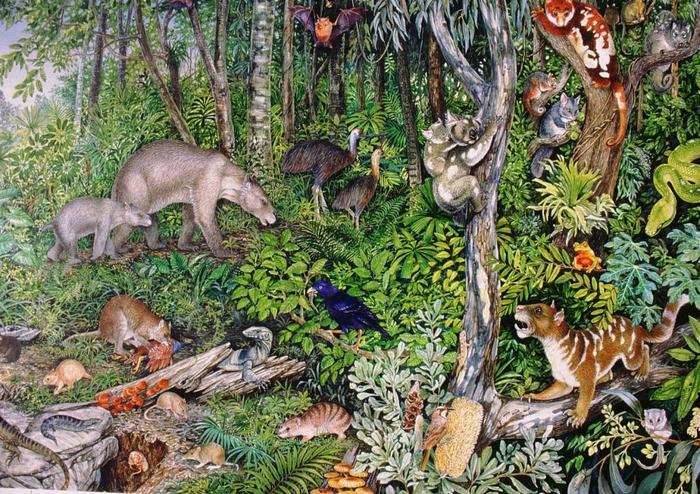 Some fossil Australian animals were truly strange   SBS Science