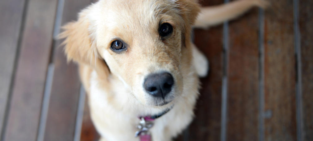 Vets are offering homeopathy to pets | Humans