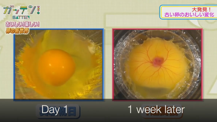 hatching shell-less eggs