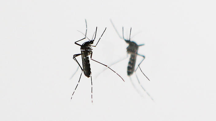 How To Prevent Mosquito Bites Sbs Life