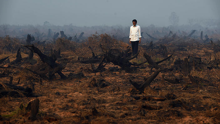 Forest fires in Borneo.