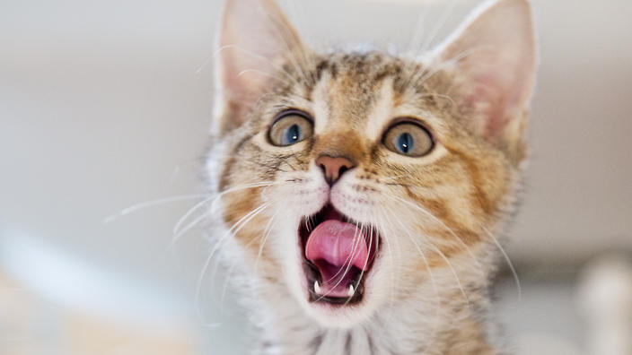 A cat looks shocked and appalled.