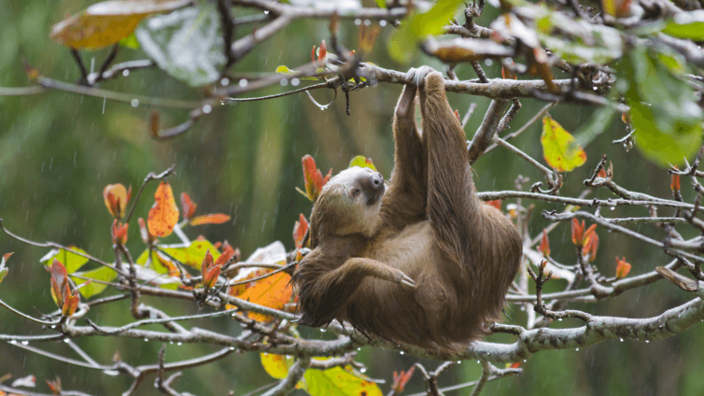 a sloth hanging off a tree branch