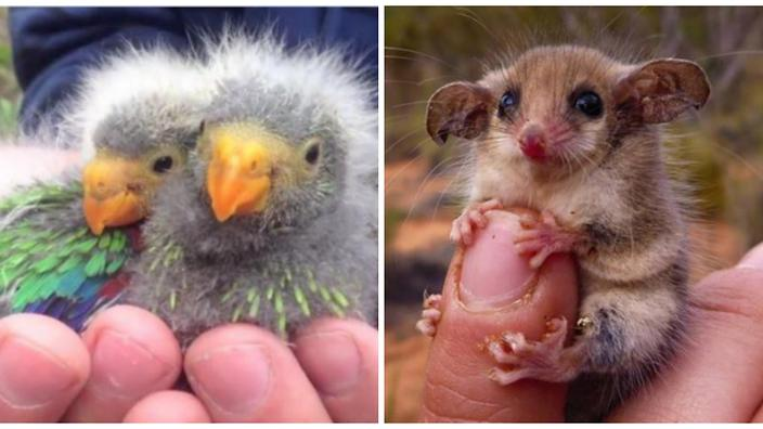 These 11 Adorable Baby Animals Are On The Aussie