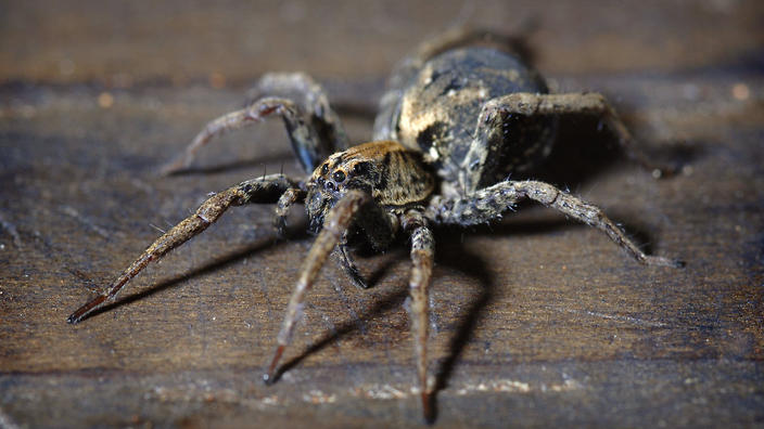 """Ian Rose's five-year-old son can't get enough of spiders, the latest of his """"obsessive enthusiasms."""""""